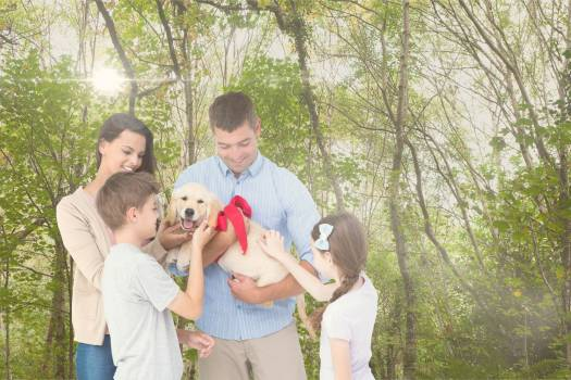 Happy family playing with dog in forest during summer #413163