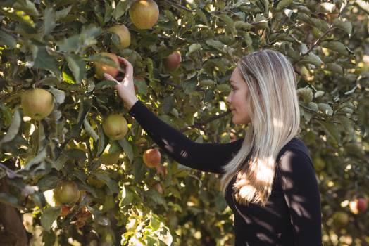 Female farmer looking at apple tree #413268
