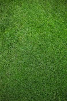 Green grass field background #413427