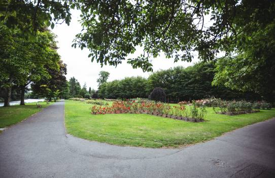 View of trees in park #413472