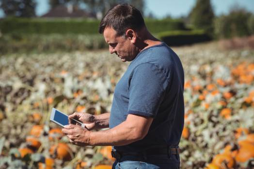 Farmer using digital tablet in pumpkin field #413598