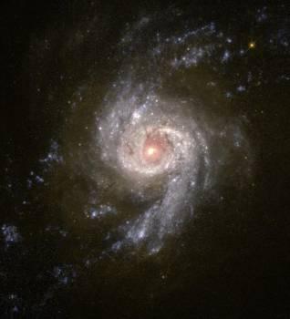 Starburst Galaxy NGC 3310 Free Photo