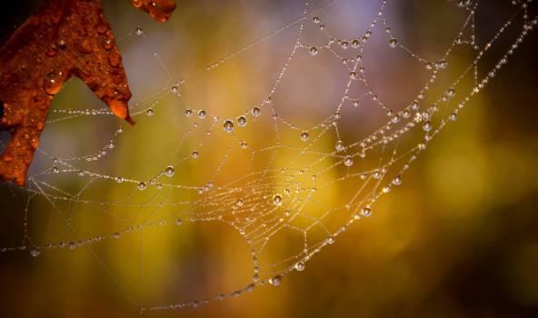Spider Web Arachnid Free Photo