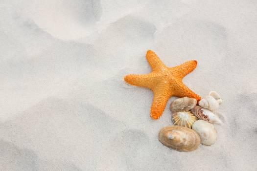 Starfish and shells on sand #414297