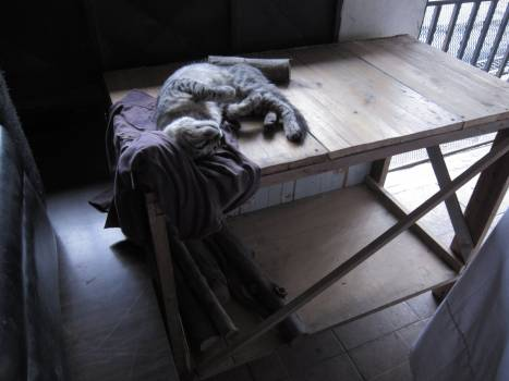 Cat Sleeping on Table Free Photo
