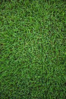 Green grass field background #414371