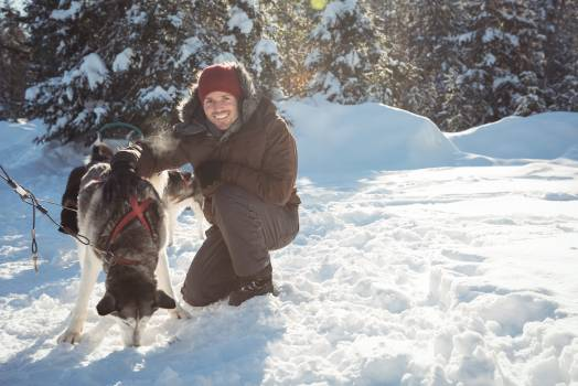 Smiling musher tying husky dogs to the sledge #414458