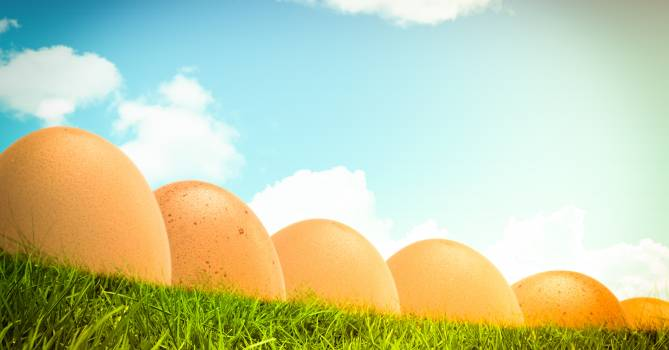 Eggs in row  in front of blue sky #414597