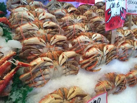 Frozen Crabs on Ice #41461