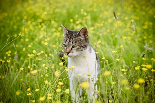 Cat in flowers #414637