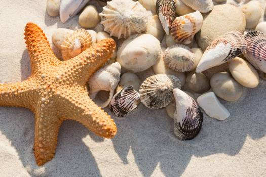 Close-up of pebbles, starfish and various sea shells on sand #414716