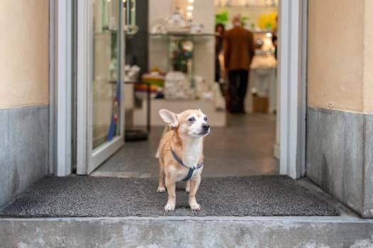 Small Dog Standing In Doorway #414978