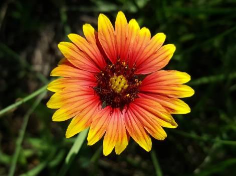 sunflower #415129