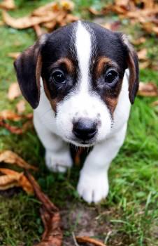 canine #415175