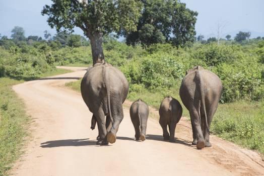 elephant #415190