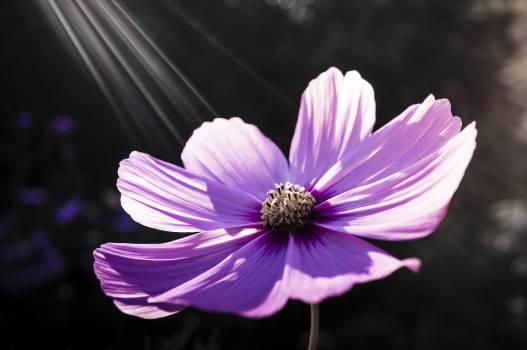 flower #415217