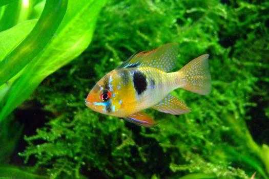 goldfish #415221