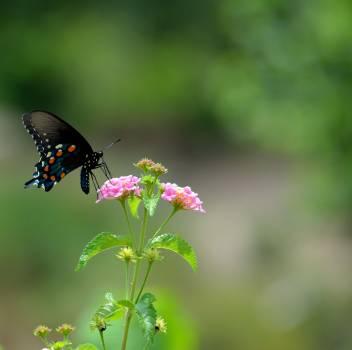 butterfly #415275