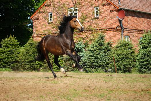 horse #415314