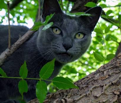 Cat Feline Kitten #415341