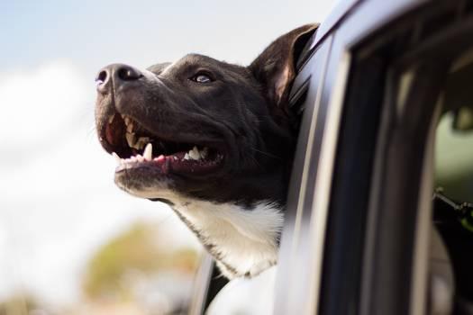 Dog Canine Pet #415343