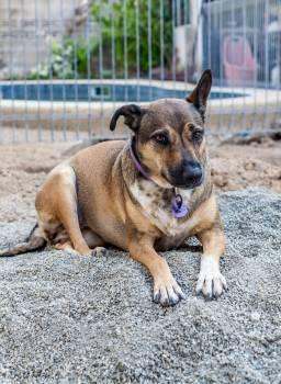 Dog Terrier Pet #415352