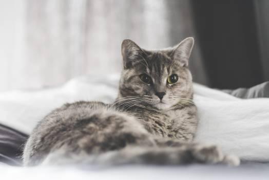 Kitten Cat Feline #415391