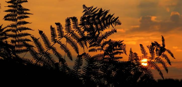 Fir Pine Evergreen #415431
