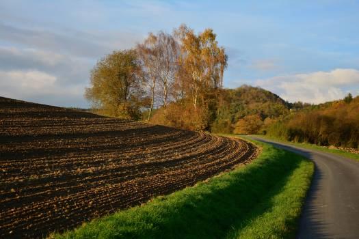 Maze Field Landscape #415440