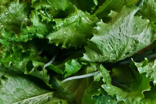 Lettuce #41546