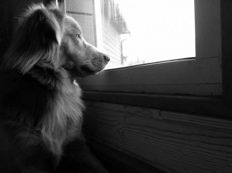 Shepherd dog Dog Canine #415491