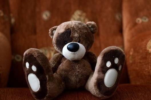 teddy #415548