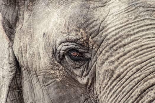 elephant #415562
