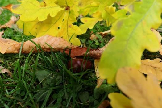 Maple Tree Autumn #415613