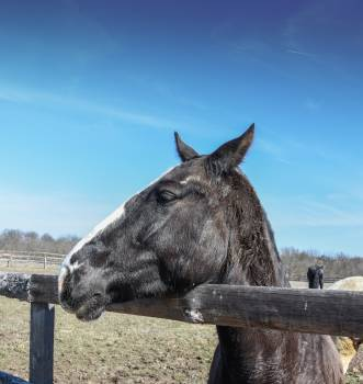 horse Free Photo