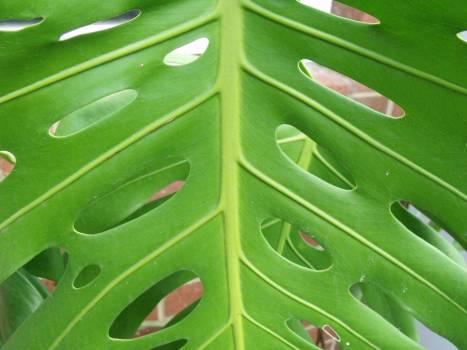 plant #415701