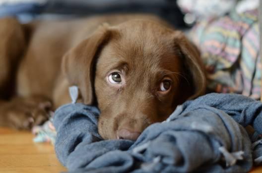 Puppy Dog Pet #415709