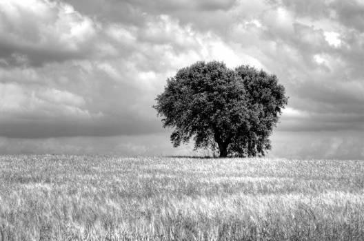 Hay Snow Tree #415793