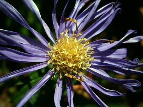 flower #415805