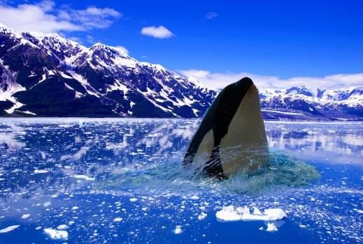 Mountain tent Tent Killer whale #415815