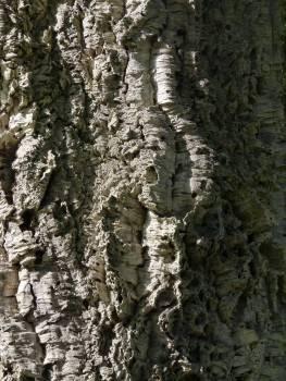 Tree Woody plant Vascular plant #415818