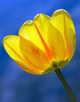 yellow #415839