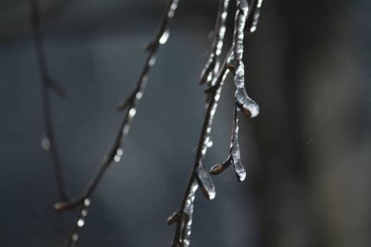 chain #415860