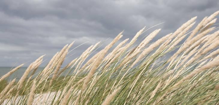 wheat #415904