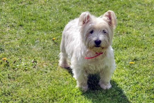 terrier #415951