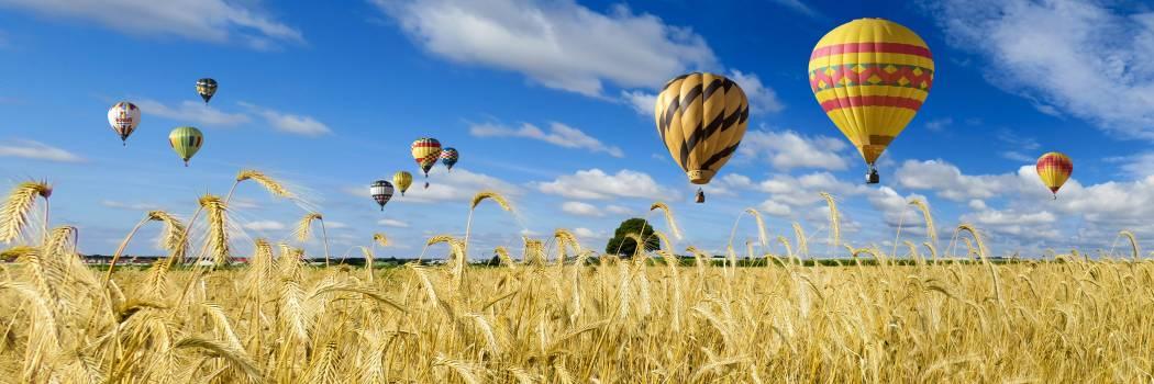 wheat #415952