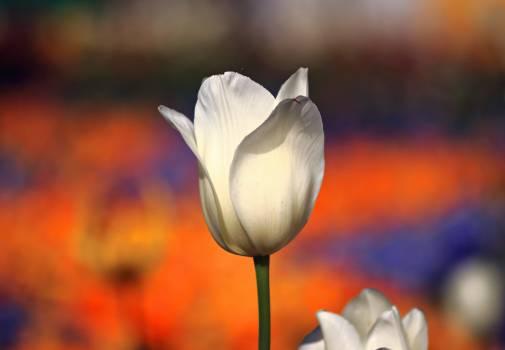 flower #415995