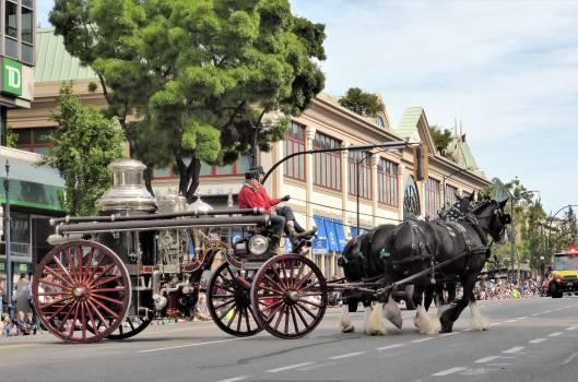 carriage Free Photo