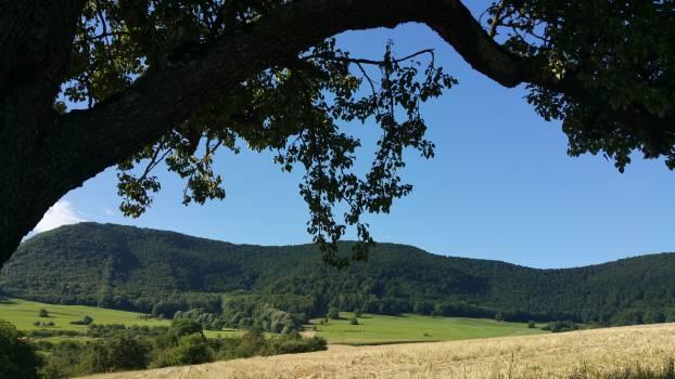 Tree Woody plant Landscape #416026