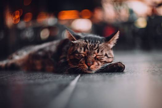 Cat Feline Pet #416134